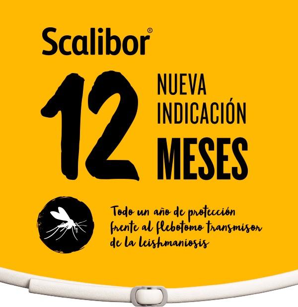 SCALIBOR 12 MESES